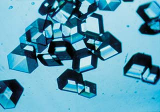 Insulin crystals grown in solution
